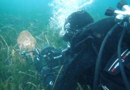 """FORO DE LA CIENCIA - Conferencia """"Ciencia contra extinción: Salvando la Nacra, el mayor molusco del Mediterráneo"""""""