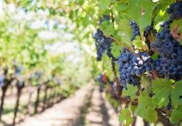 Enología y cultura del vino